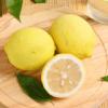 新鲜柠檬安岳黄柠檬果园直发新鲜水果多规格 5斤瑕疵果(约100-190g)