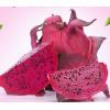广西红心火龙果精装金都一号红肉火龙果应季新鲜水果5斤中果