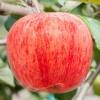 新西兰冰糖心苹果12枚 新鲜进口水果当季红富士整箱