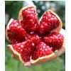 福枝旺 会理突尼斯石榴纯甜当季新鲜水果软籽薄皮孕妇水果净重5斤