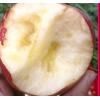 云南昭通冰糖心丑苹果 水果新鲜5斤孕妇野生脆红富士现摘10斤包邮