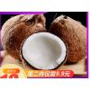 +9.9发6颗 海南老椰子新鲜当季孕妇水果包邮去皮毛椰青做椰鸡汤宝