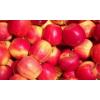 东北特产123沙果树苗嫁接123小苹果耐寒盆栽地载南北种植当年结果