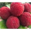 仙居东魁杨梅新鲜水果现摘现发 2021送人佳品个如乒乓顺丰包邮6斤