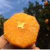 伦晚帝王春橙中华红脐橙秭归香甜无渣薄皮自然熟新鲜现摘大果10斤