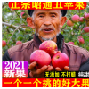 当季正宗云南昭通丑苹果野生新鲜水果整箱冰糖心脆甜10斤非阿克苏